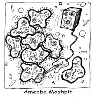 ameobas